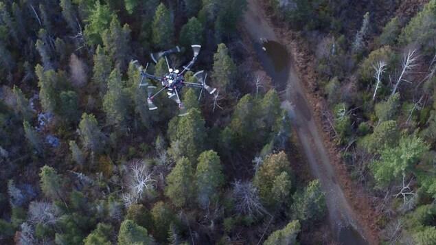 Faire l'inventaire de la forêt à vol de drone | Radio-Canada.ca