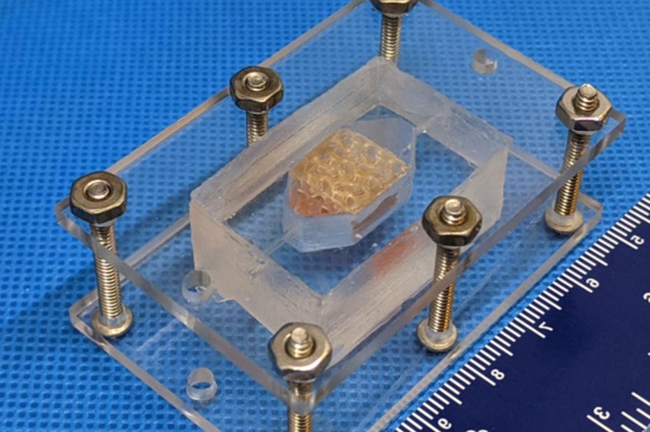 Primés par la Nasa, des scientifiques impriment en 3D des tissus hépatiques humains